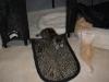 kittens00