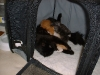 kittens13