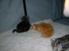 kittens05