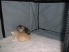 kittens11