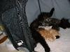 kittens14